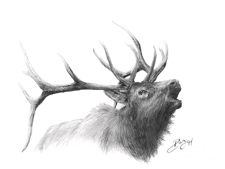 Elk Drawing by Larry-DEZ- Dismang