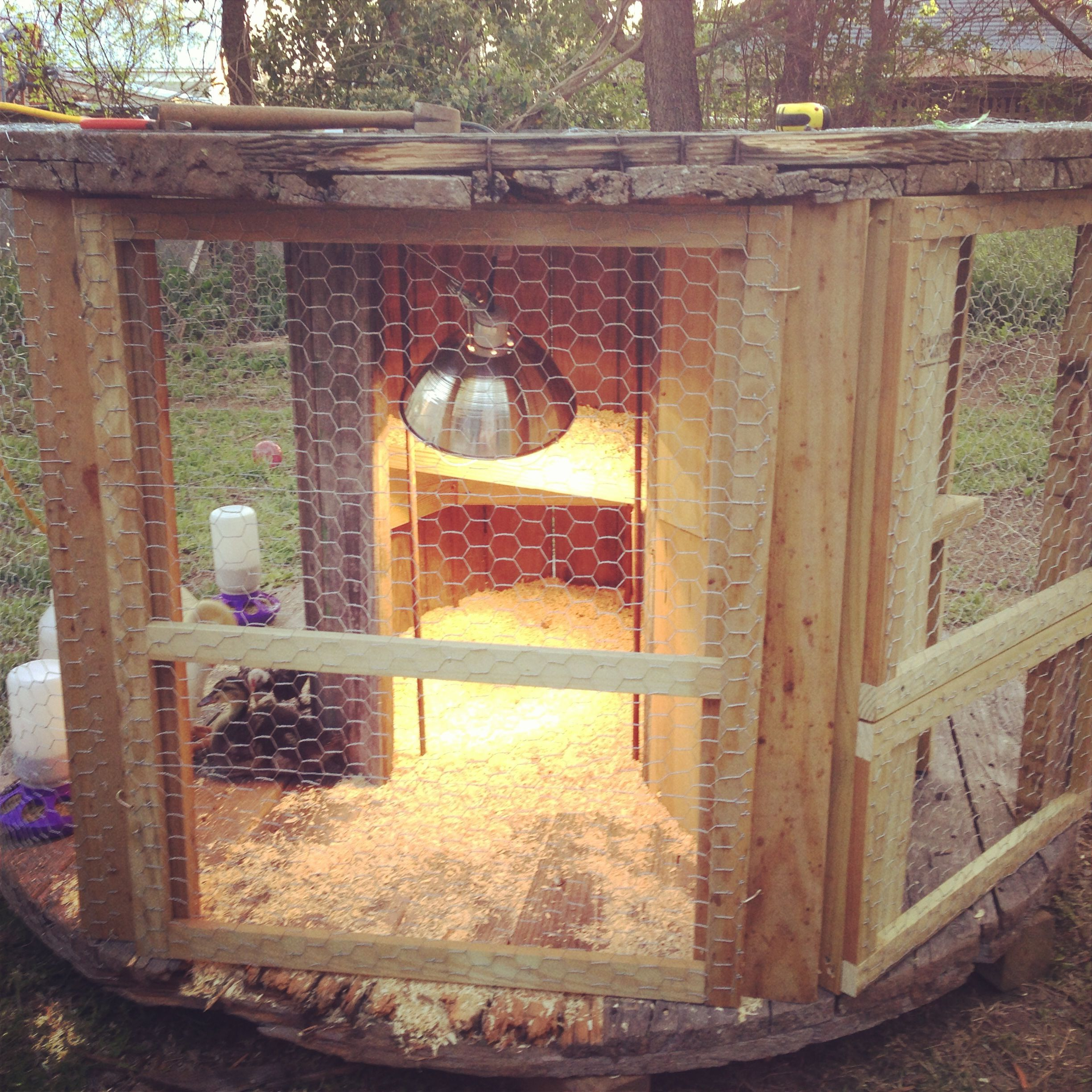 The chicken coop I built today out of an old electrical spool