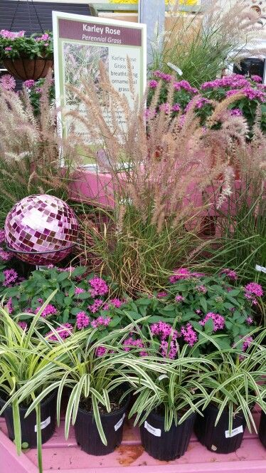 Add color and texture to your lanscape!  #shopdewaynes #growsomething
