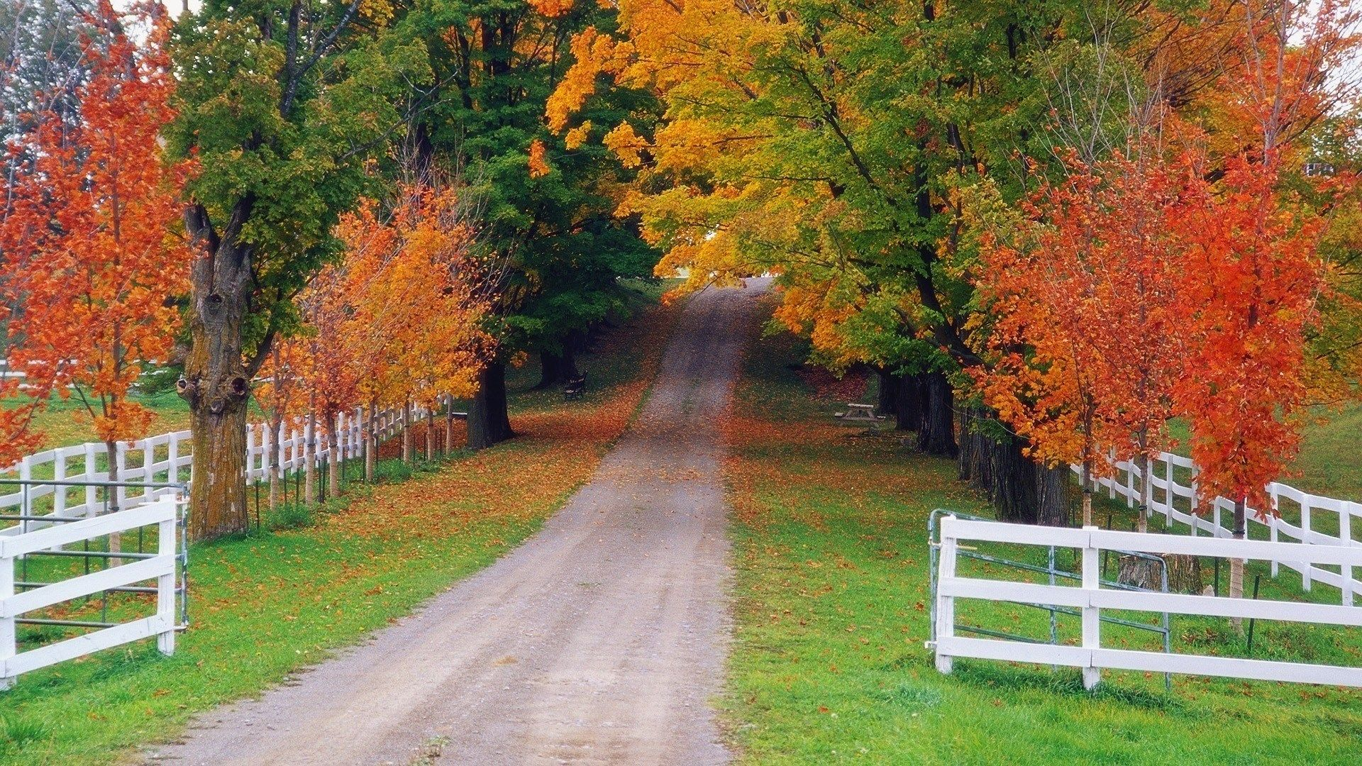Spectacular Autumn Road Wallpaper