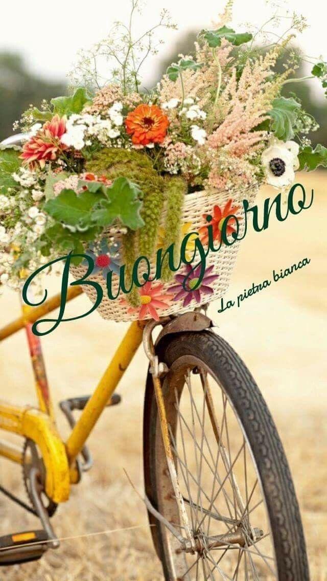 Pin Di Angie Su Buongiorno Mondo Bicicletta Giardino E Vita All