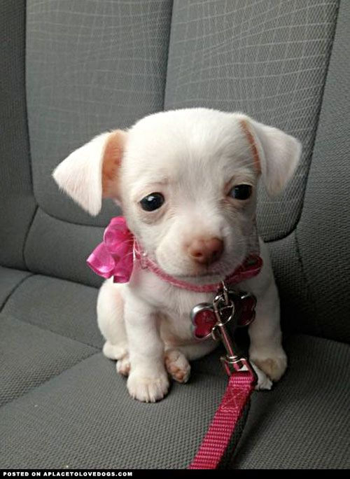 What Happened ?? This is the cute little puppy with such a ...