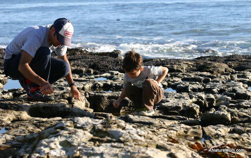 Explore The Tide Pools Natural Bridges State Beach Santa Cruz Natural Bridges State Beach Tide Pools Santa Cruz