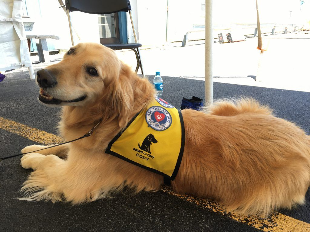 Therapy Dogs In Oswego Dogs Training Therapy Dogs Dogs