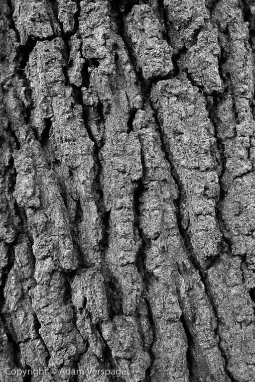 The Texture Of Oak Bark With Images Wood Texture Tree Bark