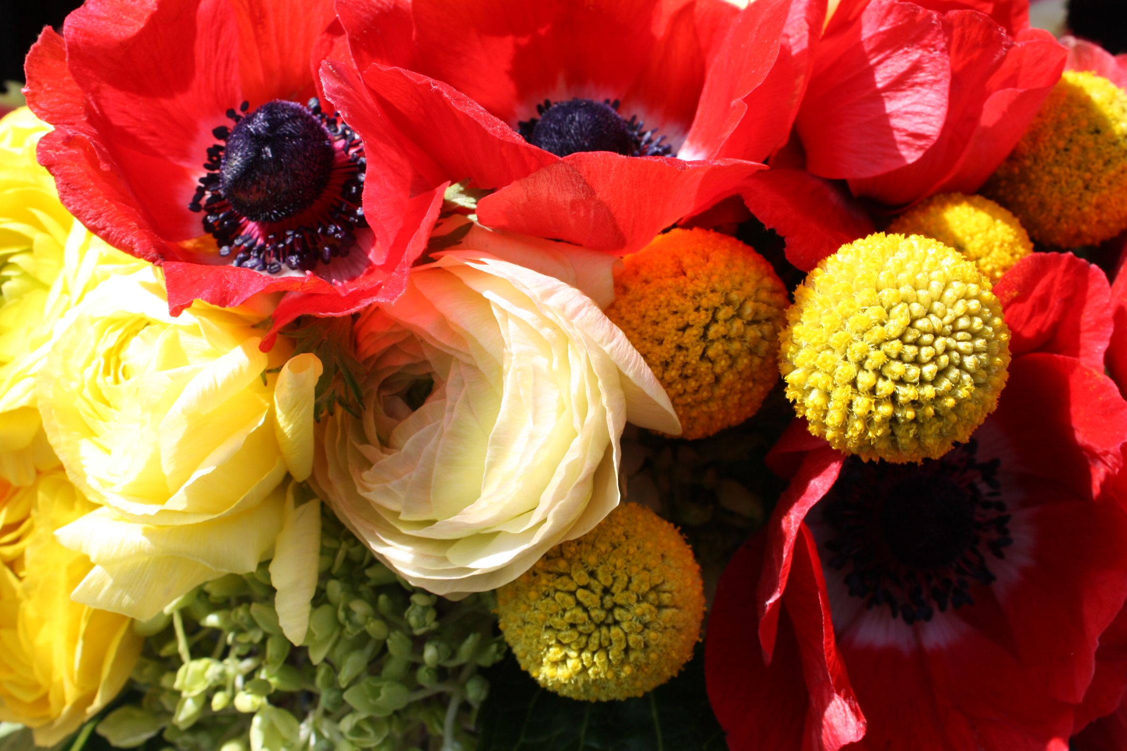 A Fun Bouquet Of Red Anemones And Billy Buttons Red Anemone Billy Buttons Flowers