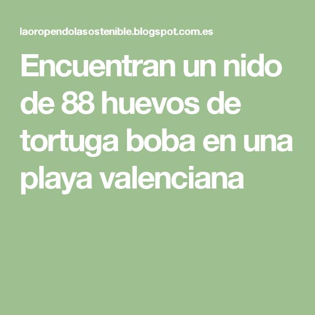 Encuentran un nido de 88 huevos de tortuga boba en una playa valenciana