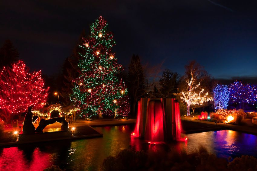 lights illuminating the Denver Botanic Gardens during the