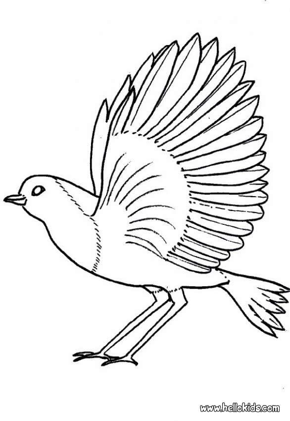 robin coloring page nice bird coloring sheet more original content on hellokidscom