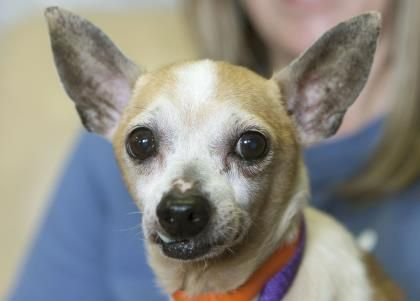 Adopt Clark A Lovely 6 Years Dog Available For Adoption At