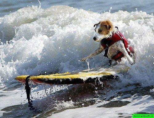 surfy dawg