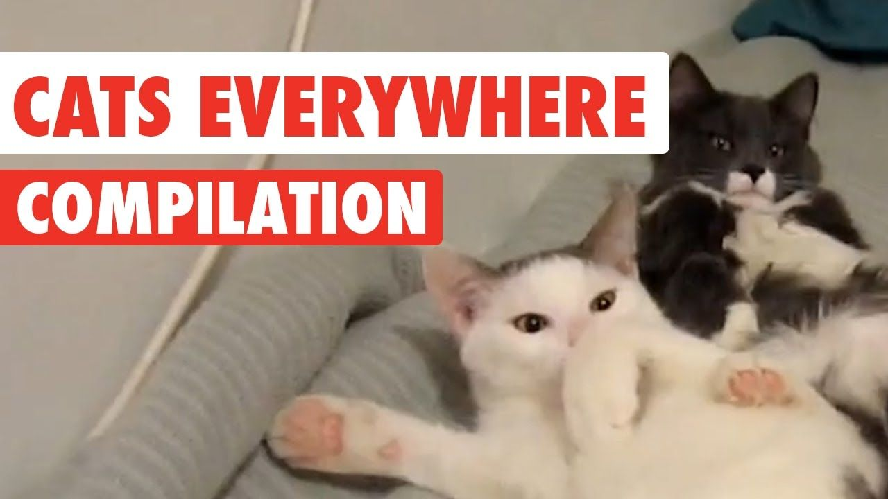Cats Everywhere Video Compilation 2017 Cats, Cool cats
