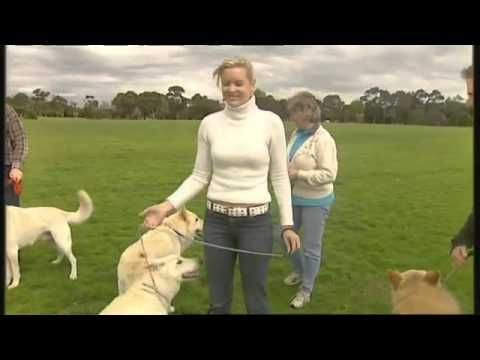 Burkes Backyard Dogs burke's backyard, white german shepherd road test | potential dog