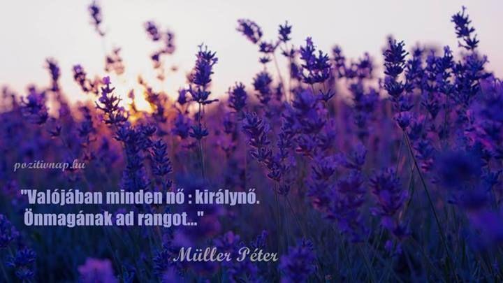 müller péter idézetek nőkről Müller Péter bölcsessége a nőkről. A kép forrása: Pozitív Nap