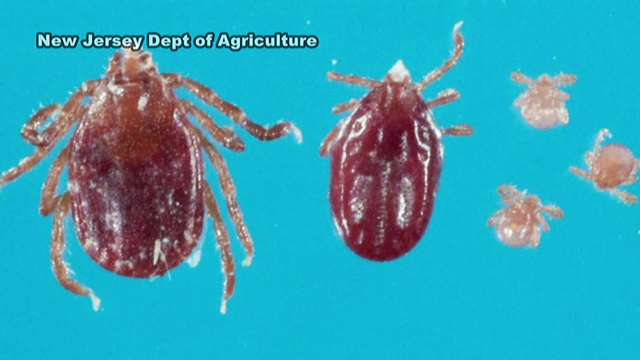Dangerous tick found in Hunterdon County, NJ (With images