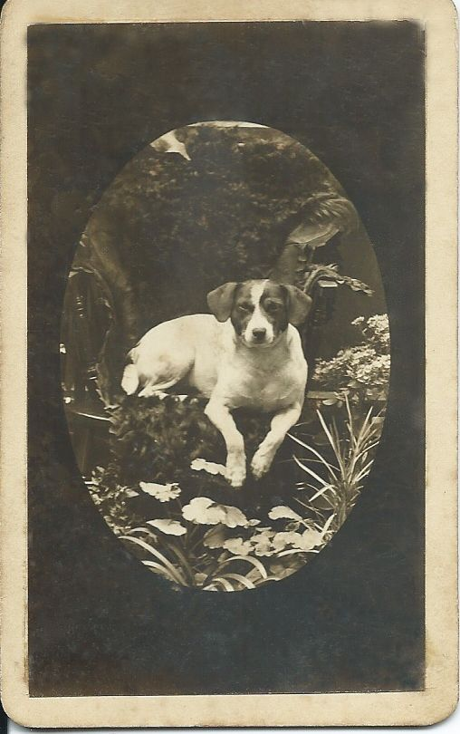 1900s cdv of Jack Russell dog in fantasy tropical paradise. Silver gelatin print. No identification of dog or photographer. From bendale collection
