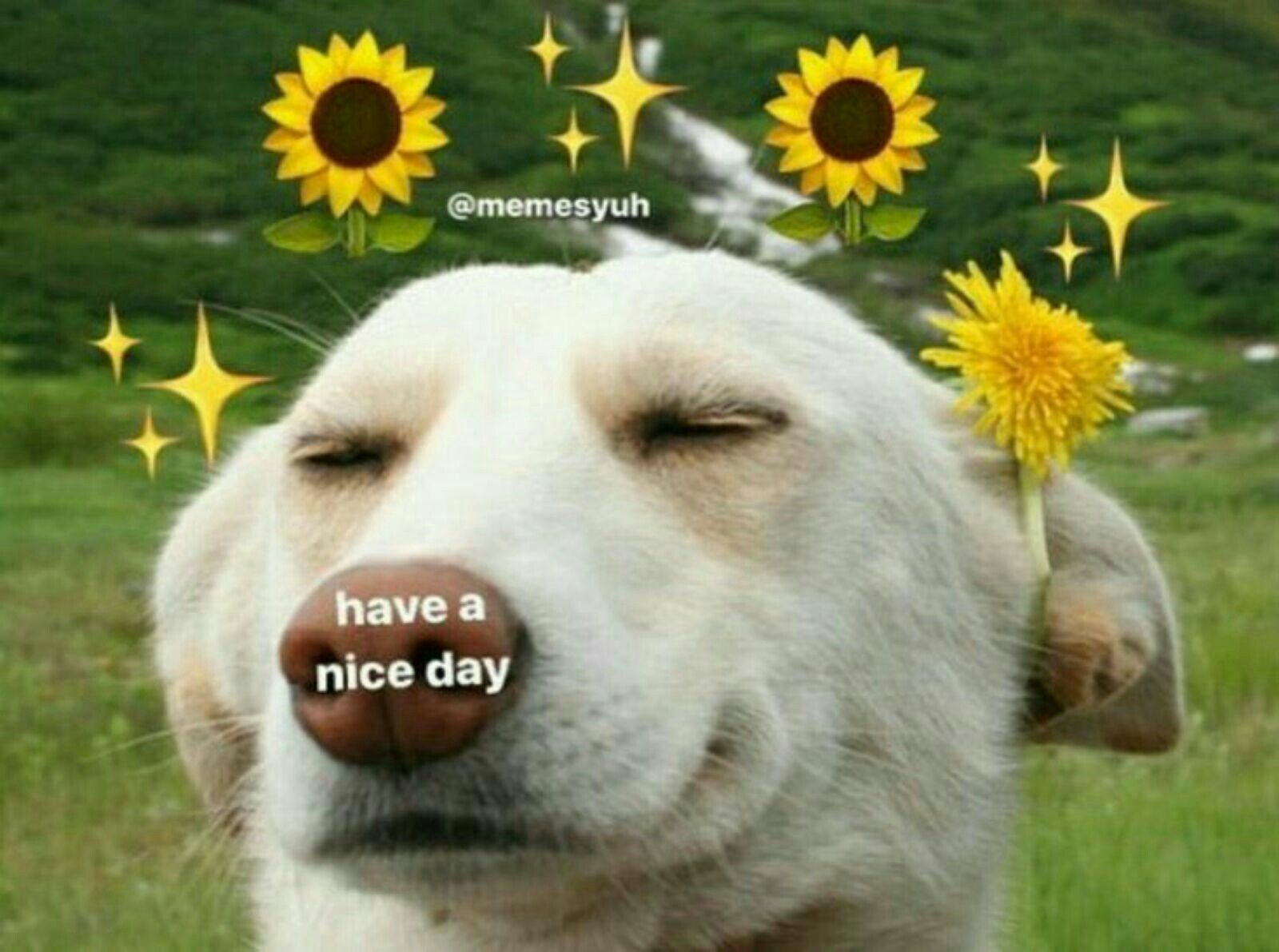 Cute Good Morning Wholesome Memes
