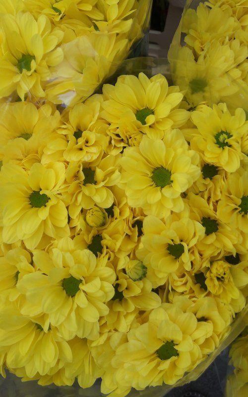Essences The Perfume Essences Can Be Different As Flower Essences
