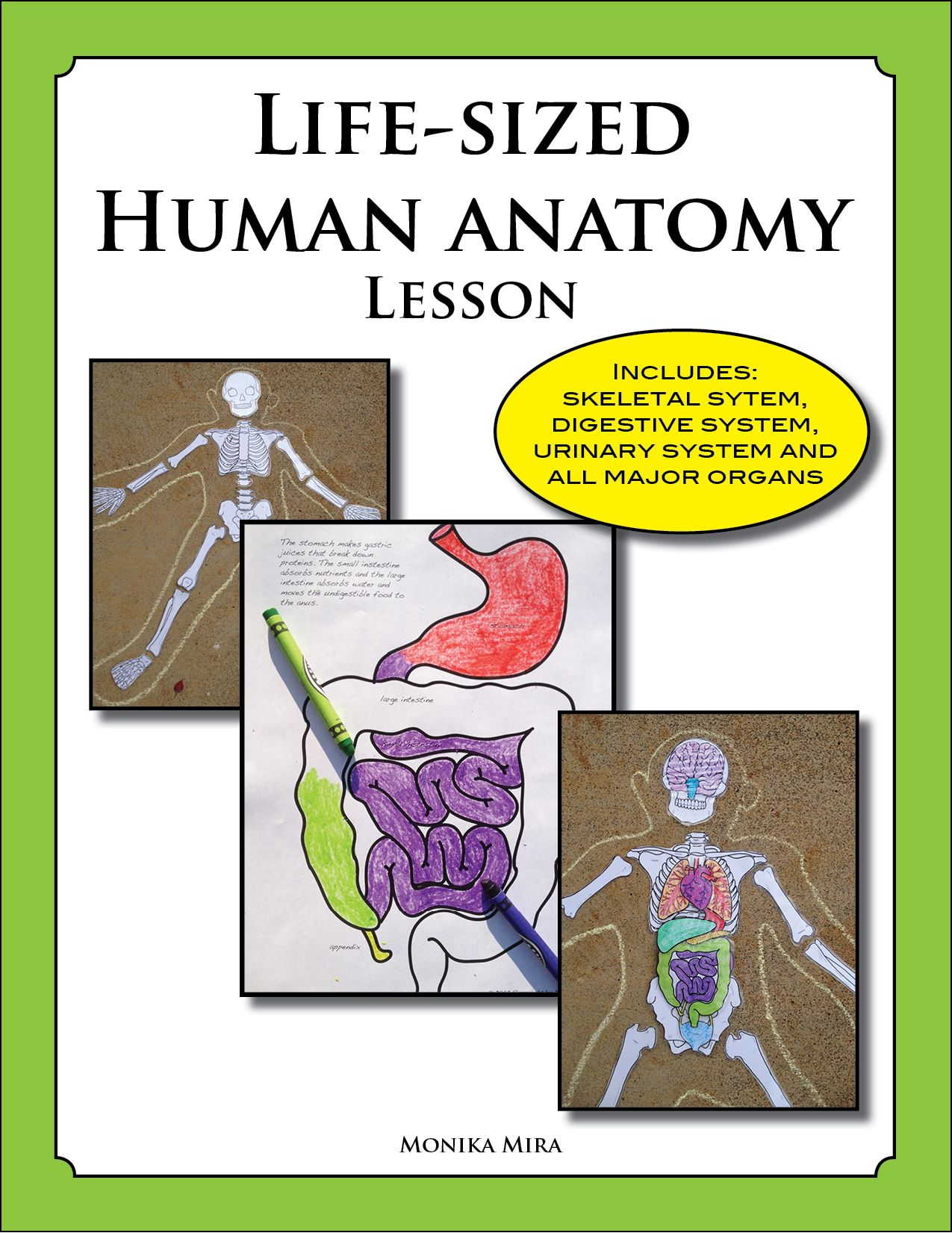 Life Sized Human Anatomy Lesson Including Skeletal And