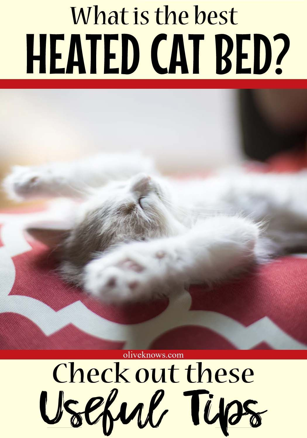 How To Choose The Best Heated Cat Bed Heated Cat Bed Cat Sleeping Cat Insurance