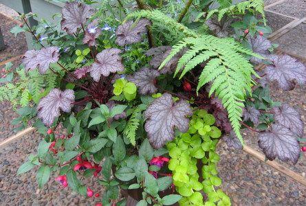 Red Cedar Gardens, Stillwell, Kansas; my favorite gardening place