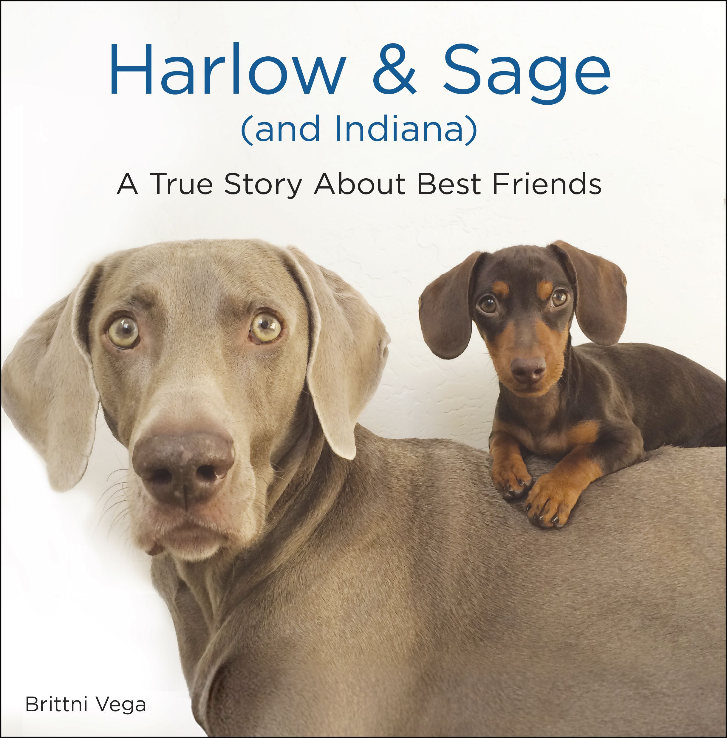 By Brittni Vega The Ultimate Holiday Gift For Dog Lovers Everywhere Featuring The Most Adorable Best Friends In The World B Dog Books Sage Books Dog Gifts