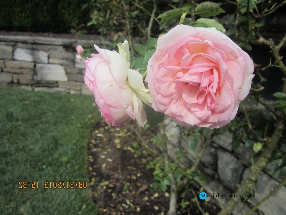 Gardening:Rose Garden Tips And Ideas Gardening Landscape Plans Garden Seating Planting Plan Climbing Rose Flower Yard Decor Small Backyard Landscaping Layout Design Ideas (41) Rose Garden Tips and Plans Ideas : How to Grow a Rose Garden in Pots and Other Flower Container
