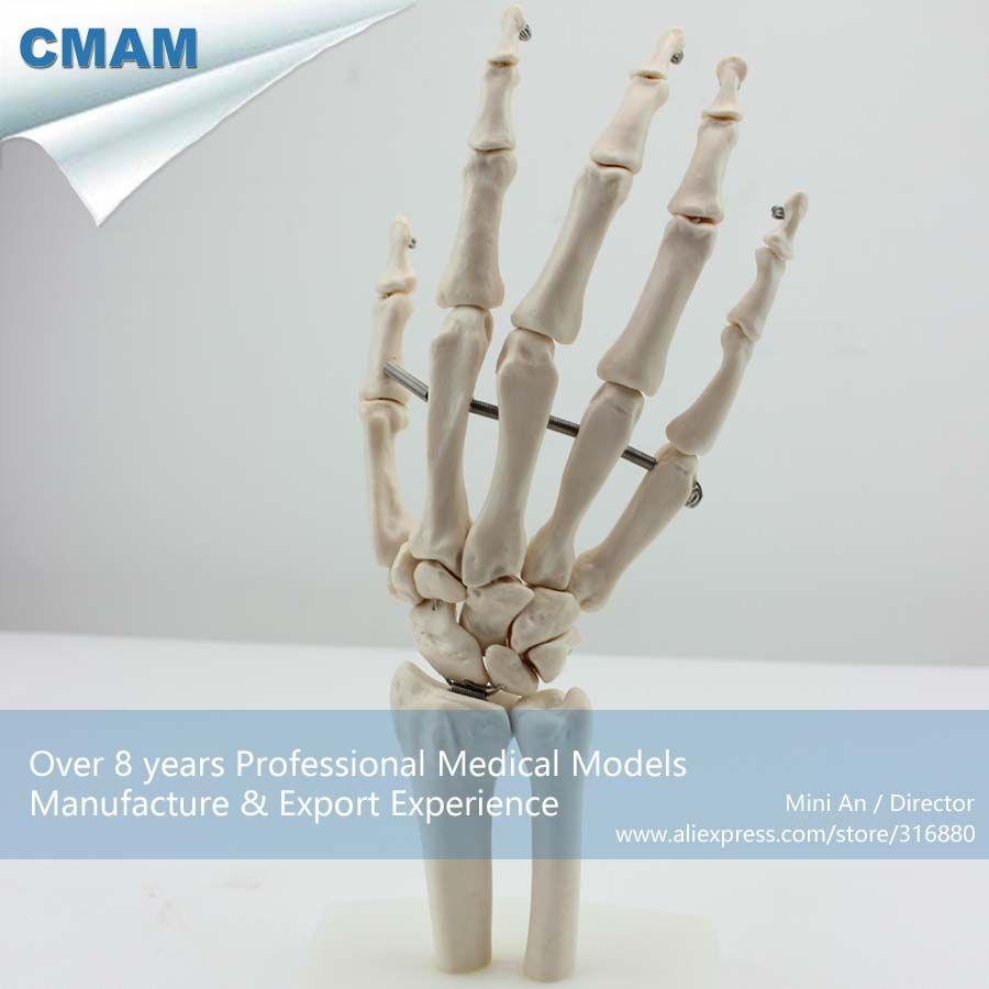 Medical Anatomy 1:1 Full Size Hand Skeleton Model (Joint03) | Joint ...