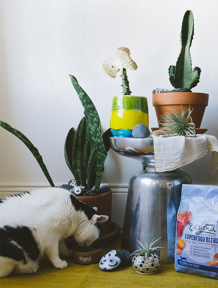 Pet friendly houseplants a diy more houseplants ideas for Indoor gardening with cats