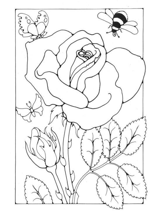 Coloring page rose with bee and butterfly coloring picture rose