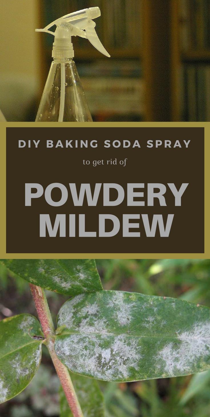 a34355157471699d1c129f3b96348621 - How To Get Rid Of White Mold On Cucumber Plants