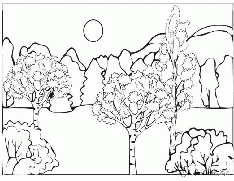 Раскраски Деревья раскраска лесдеревцаполянкагоры