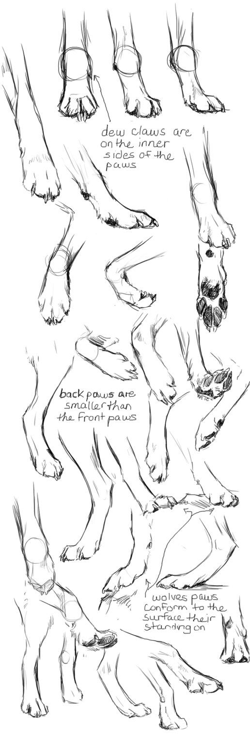 Find This Pin And More On Animal Art How To Draw Dog