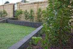 Ac Landscape Developments Warrnambool Portuguise Laurel Landscape Garden Warrnambool