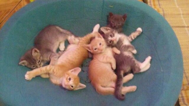 Lindos y tiernos gatitos