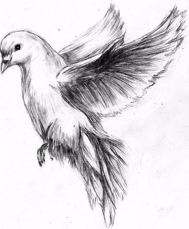 Fliegende Taube Bleistiftzeichnung – Google Search More – Adriano Antiguo fliegende Taube Bleistiftzeichnung – Google Search More – Adriano Antiguo Drawing Tips google quick draw
