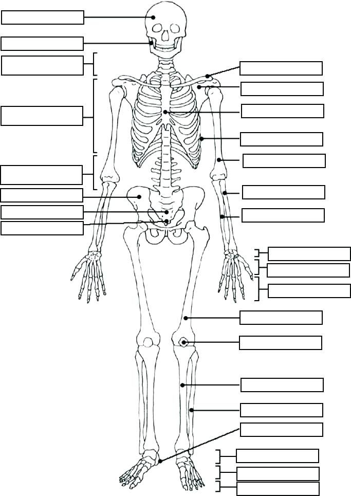 Anatomy Physiology Coloring Workbook A Complete Study
