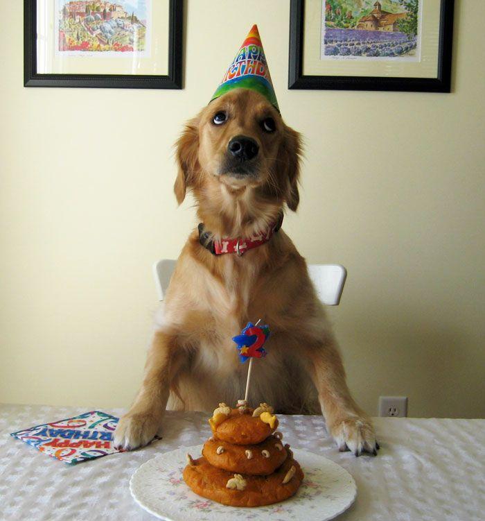 My Birthday Wish Happy Birthday Dog Birthday Meme Dog Dog Birthday