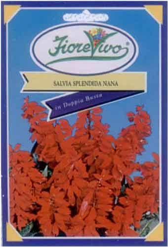 Salvia Splendida Nana - Semilandia