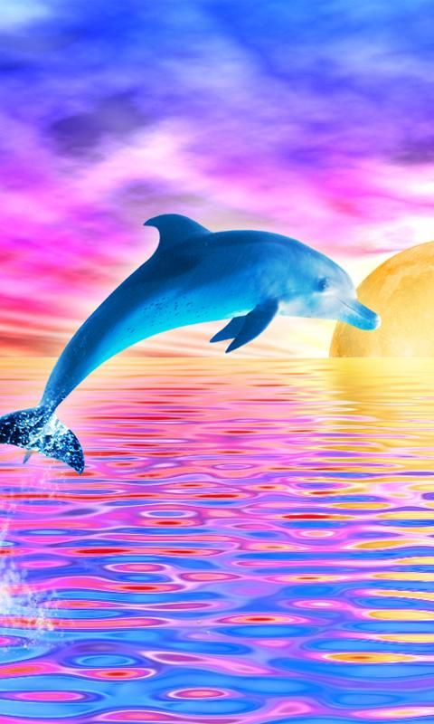 Dolphins Sunset Paintings