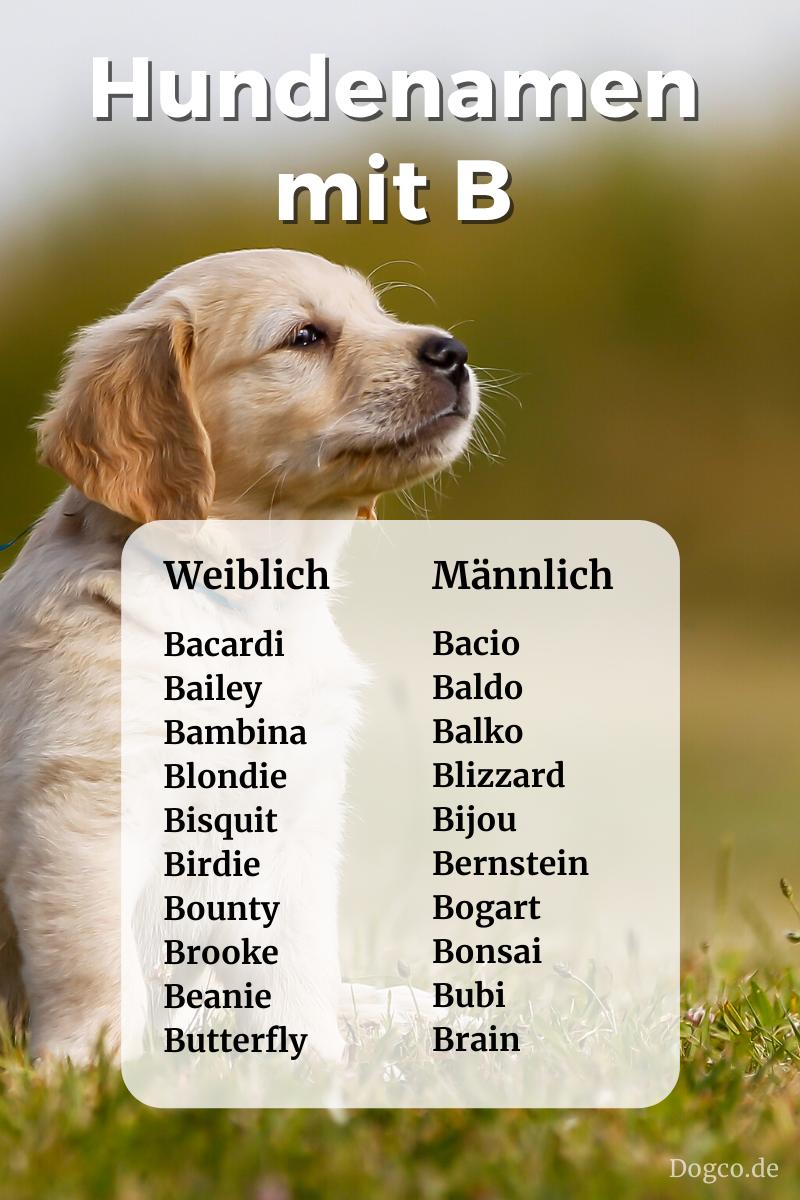 Hundenamen Mit B Weiblich Und Mannlich Mit Bedeutung Als Namensliste In 2020 Hundenamen Namen Fur Hunde Hunde