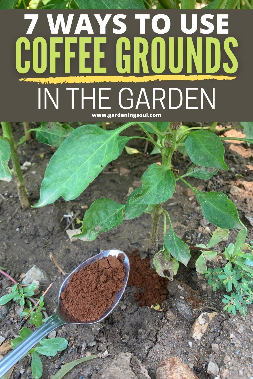 7 Ways To Use Coffee Grounds In The Garden Coffee Grounds Garden Organic Gardening Gardening Tips