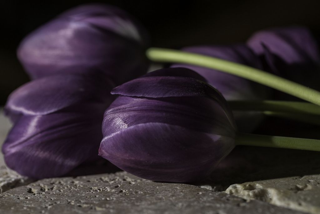 https://www.flickr.com/photos/70379801@N03/13939970689/in/pool-tulips