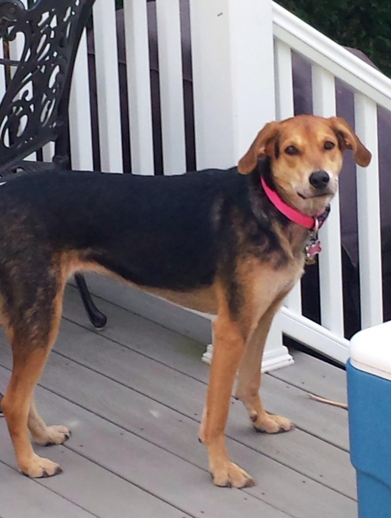 Adopt Binks On Dogs Pet Supplies Plus Dog Sitting