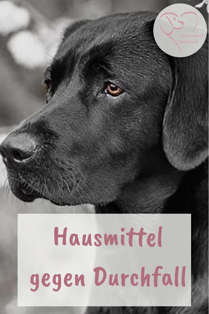 Hausmittel Gegen Durchfall Beim Hund Herzenshund Kerngesund Durchfall Beim Hund Durchfall Hund Hunde