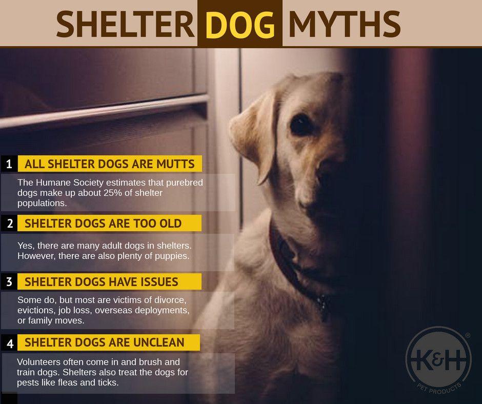 Shelter Dog Myths Khlovespets Dogs Dogtips Www Khpet Com Dogs Shelter Dogs Dog Control
