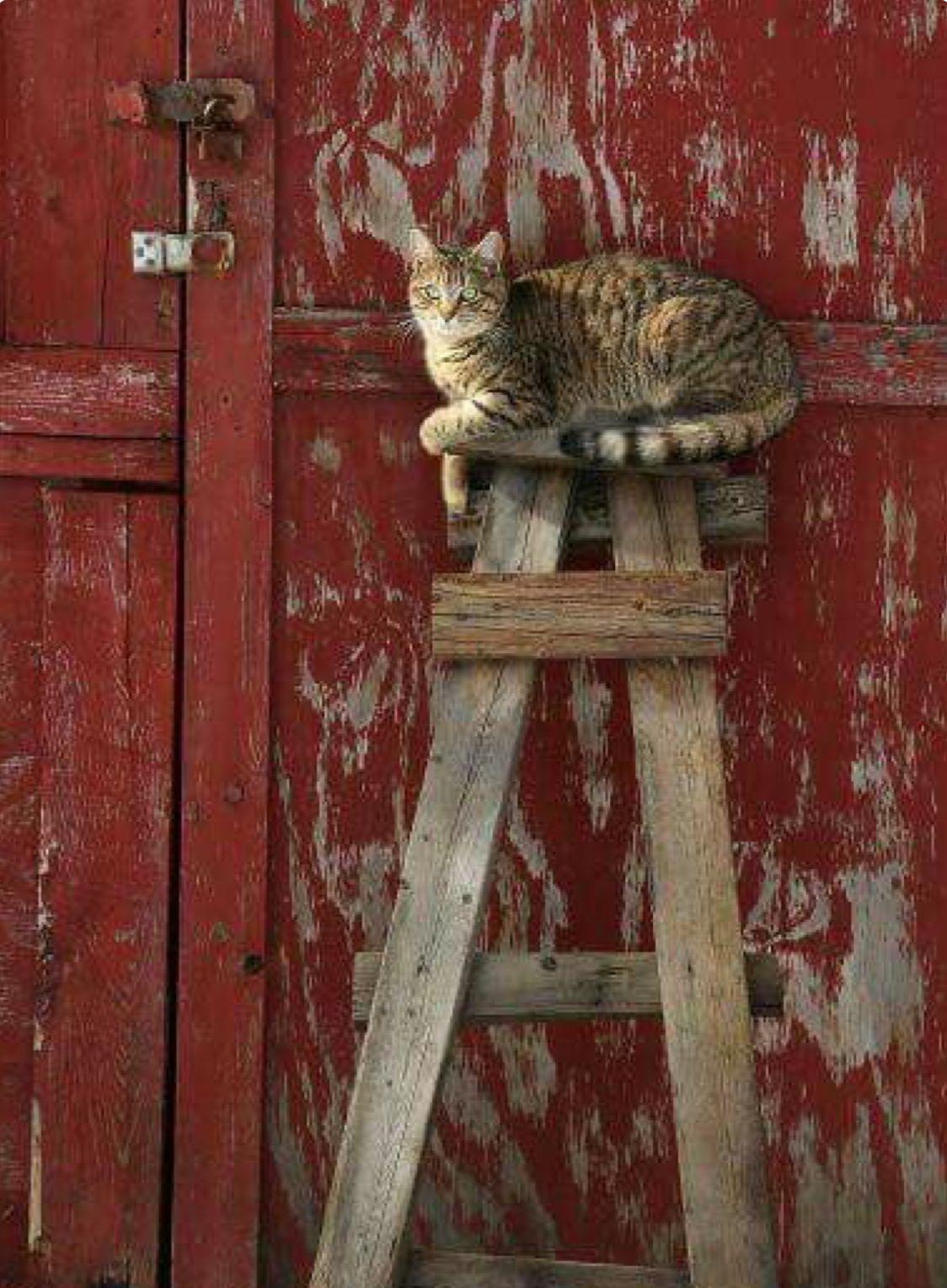Pin De Deanne Em Cats Gatos Loucos Pose De Gato Gatos Domesticos