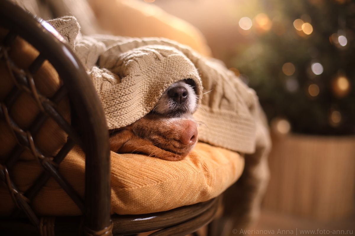 Носики #собака #нос #уют#собака #нос #уют Photographer ...