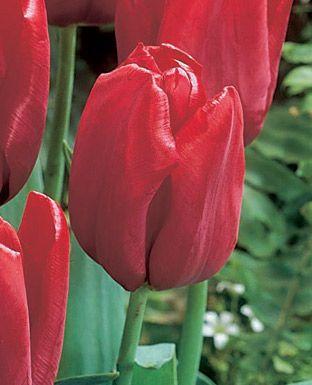 tulipa 39 seadov 39 georgia 39 s vauxhall pleasure garden pinterest. Black Bedroom Furniture Sets. Home Design Ideas