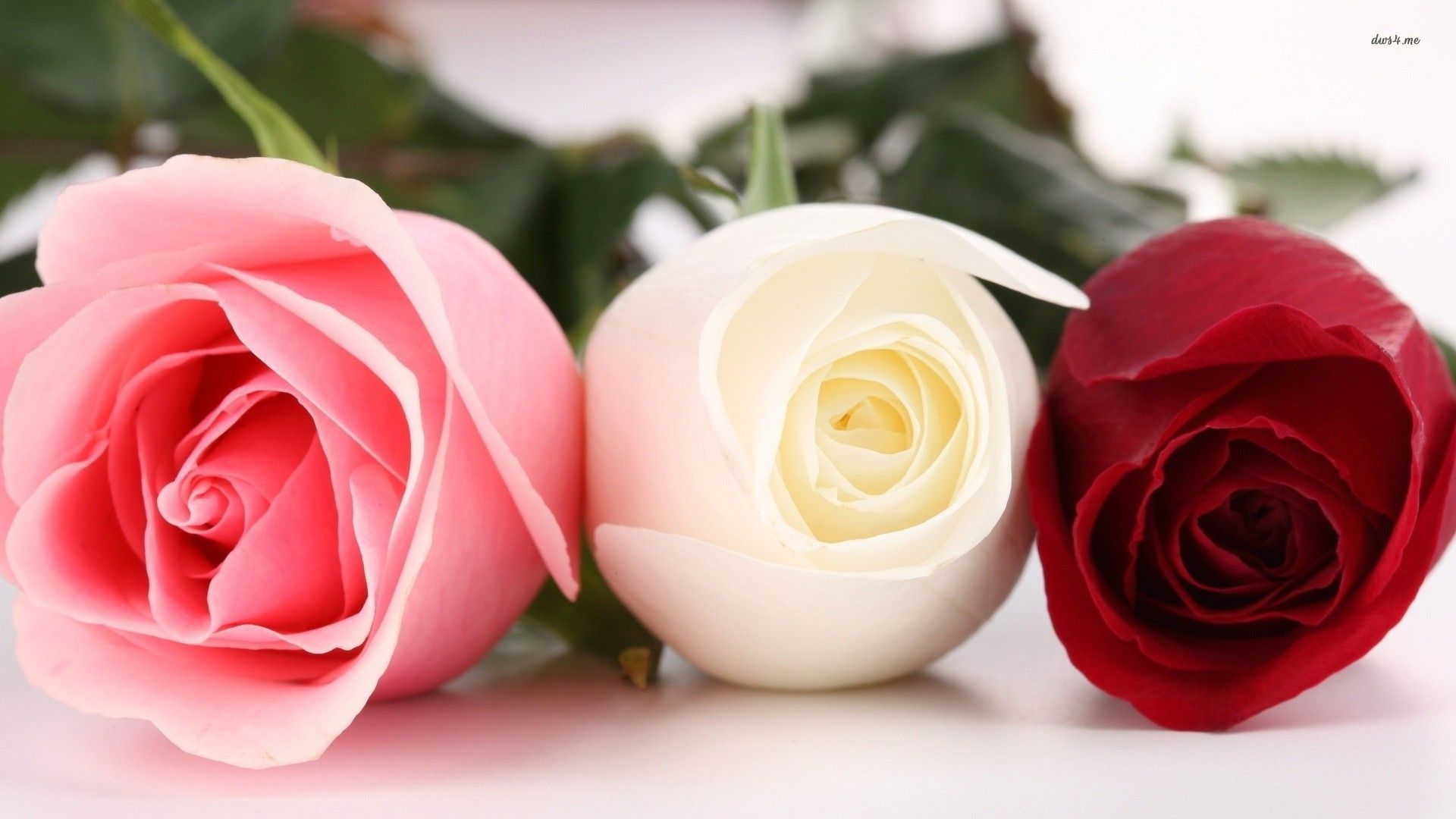 Pink White And Red Roses Hearts And Flowers Pinterest